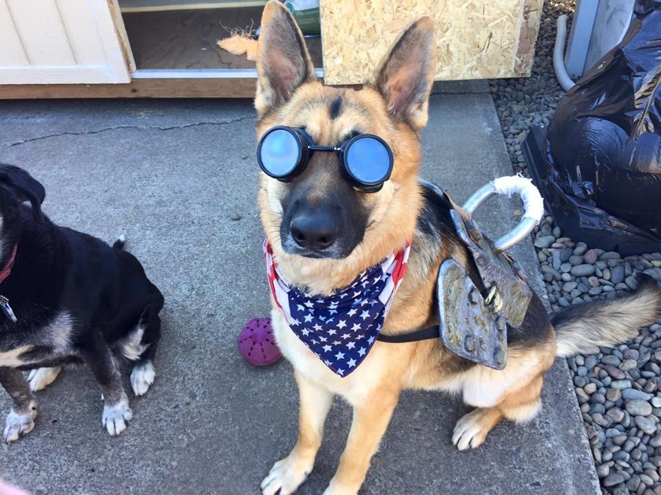 dogmeat%20finish%204.jpg