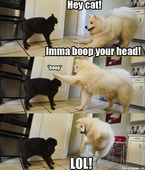funny-cat-dog-boop-head.jpg