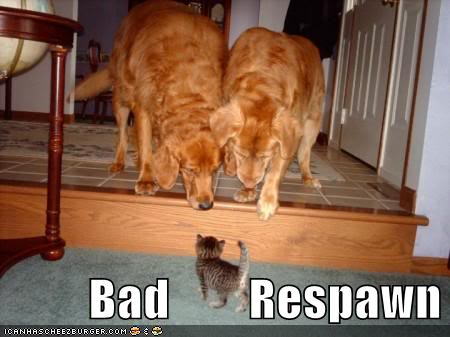 funny-pictures-1-cat-2-dogs.jpg