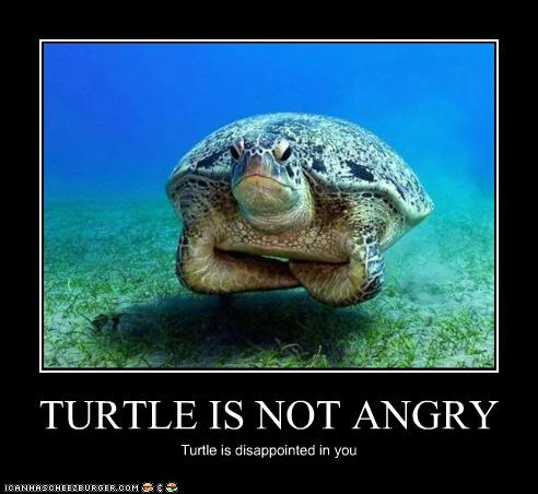 funny-pictures-turtle-is-disappointed.jpg