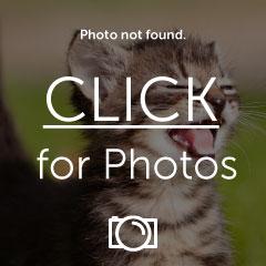 KittyKick.jpg